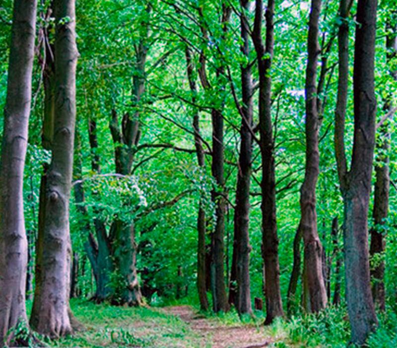 La madera el mejor aliado del medio ambiente